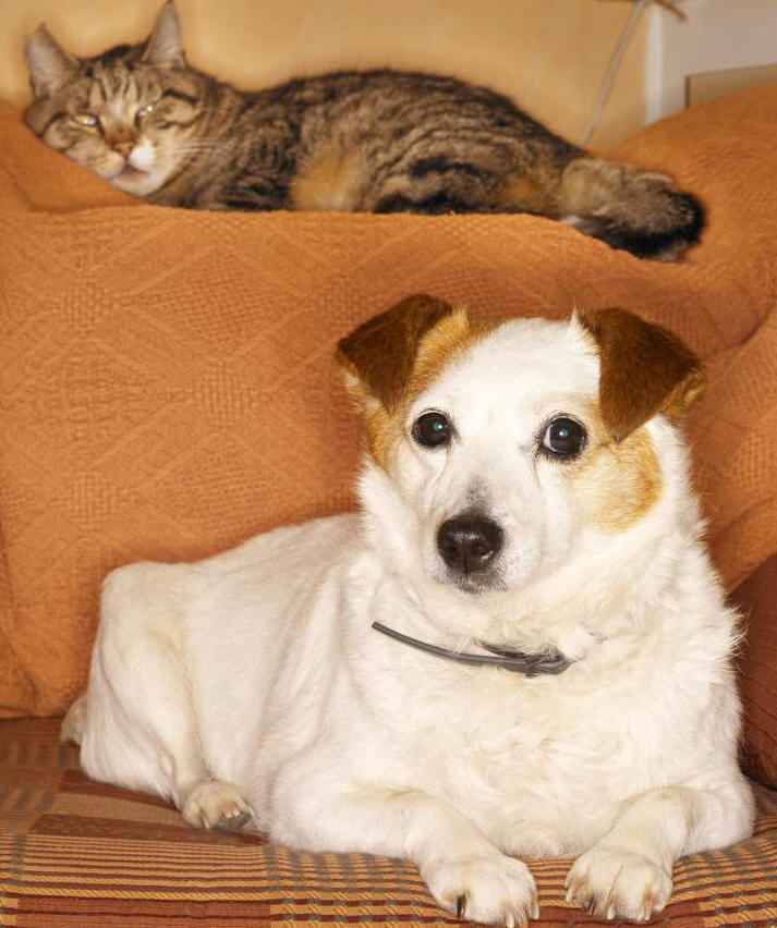 Cancer Treatment for Dogs and Cats