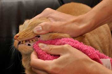 Pet Dental Care: No More Bad Breath