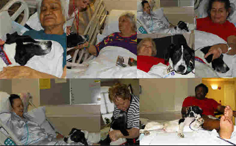 Therapy Dog Visits the Sick:  Chaya's Story