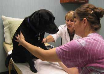 dog acupuncture treatment